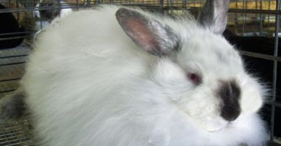 How PETA Won the Angora Debate and What It Means for Fashion